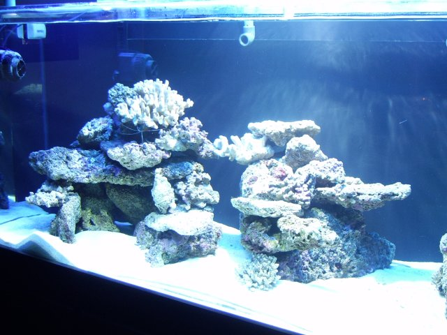 DragonReef1