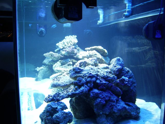DragonReef2