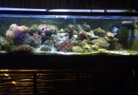 JacquesB - new-look aquarium pics - Updated