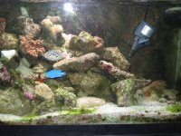 JacquesB - new-look aquarium pics