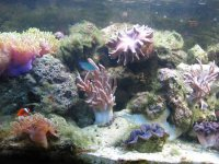 JacquesB - new-look aquarium pics 4