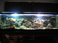 JacquesB - new-look aquarium pics - NEW UDPATES