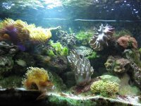 JacquesB - new-look aquarium pics - NEW UDPATES 3