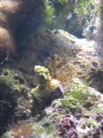 JacquesB - new-look aquarium pics - NEW UDPATES 7