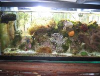 JacquesB's latest Updated pics - 2 metre tank