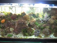 JacquesB's latest Updated pics - 2 metre tank 2