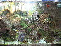 JacquesB's latest Updated pics - 2 metre tank 8