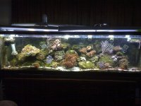 JacquesB - new-look aquarium pics - NEW UDPATES 4
