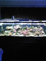 JacquesB's updated pictures of my 2 metre tank 4